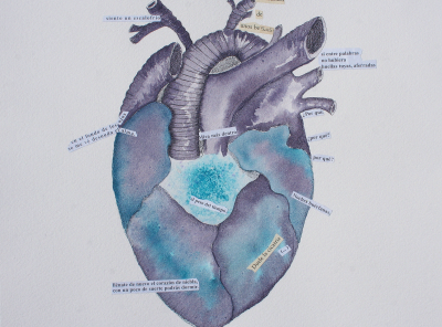 Corazón anatómico